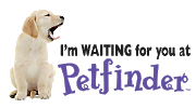 Petfinder waiting 2