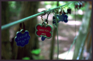 Dog Tags Hanging Outdoors 1024