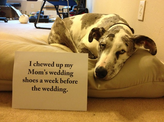 Shaming Chewed Wedding Shoes 2013