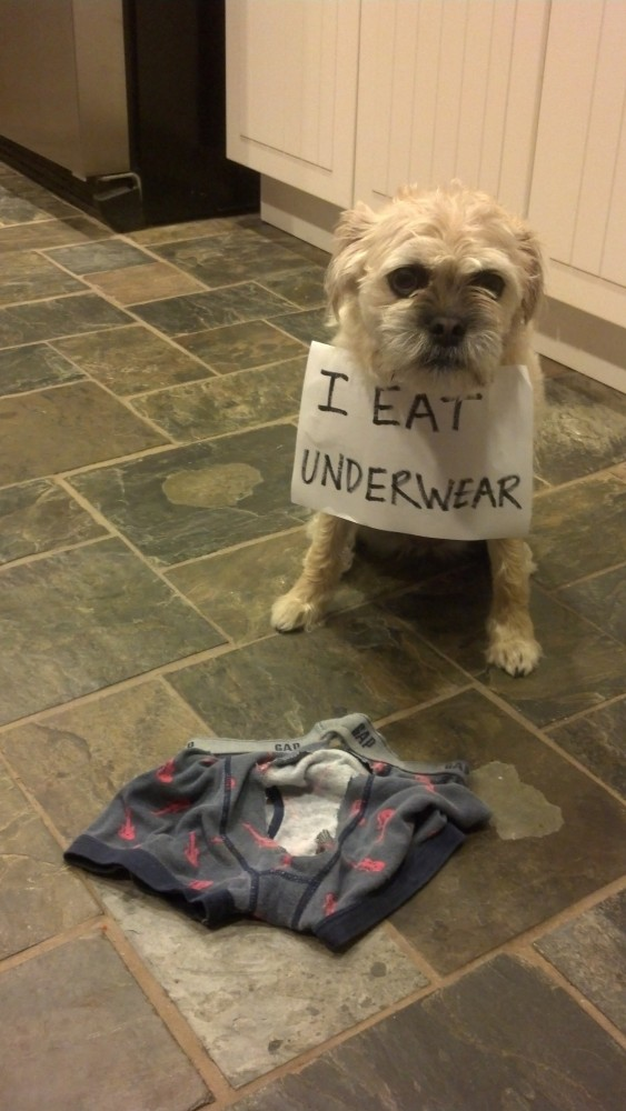 Shaming Eat Underwear 2013