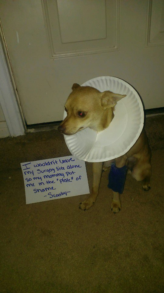 Shaming Paper Plate 2013