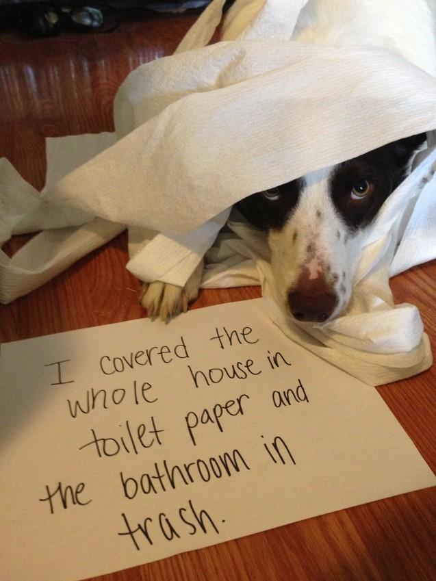 Shaming Toilet Paper 2013