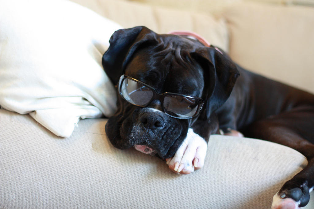 Black Boxer with Glasses 1024
