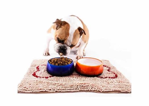 Bulldog Eating from Dog Bowls on Dog Mat 525