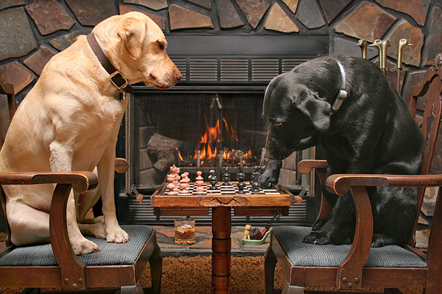 Labs Playing Chess 640