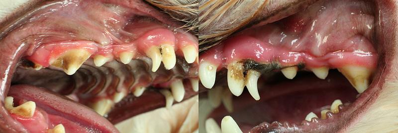 Teeth 800
