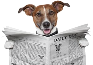 Jack Russell Reading Newspaper 300