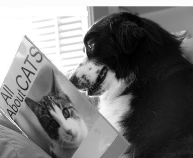 A dog in bed reading a book about cats mfp org