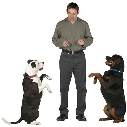 Man Training Dogs to Beg