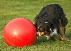 Boomer Ball & Dog