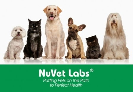 The BEST Supplements for Pets