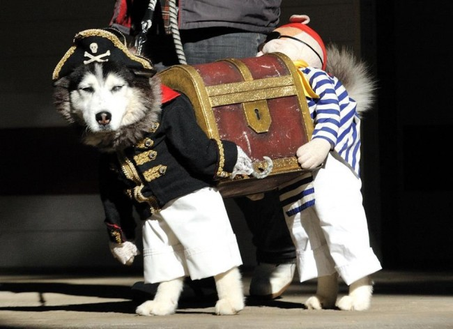 Dog-Pirates Halloween