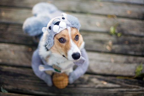 GettyImages halloween Squirrel