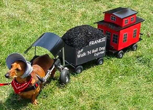 disabled dog railroad conductor costume