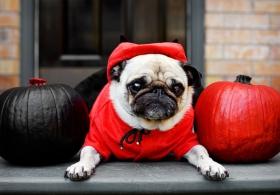 Halloween Dog Costumes 2014
