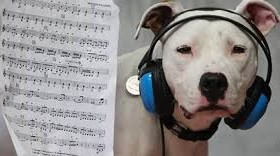 Pet Tech – Music & Dogs