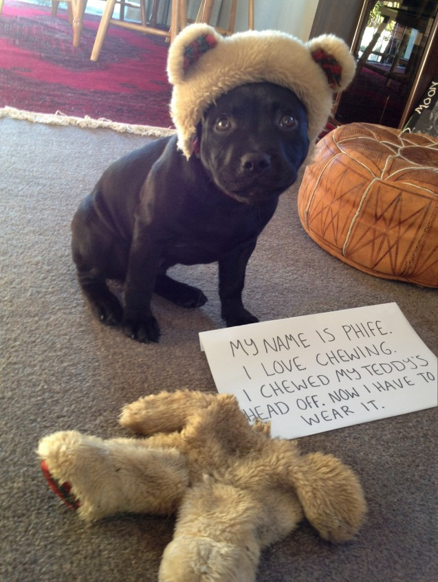 Shaming Chew Teddy Bear