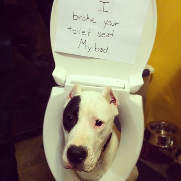 Shaming Toilet Seat