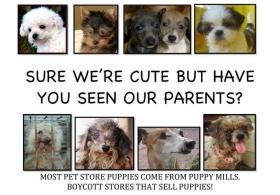Puppy Mill Investigations