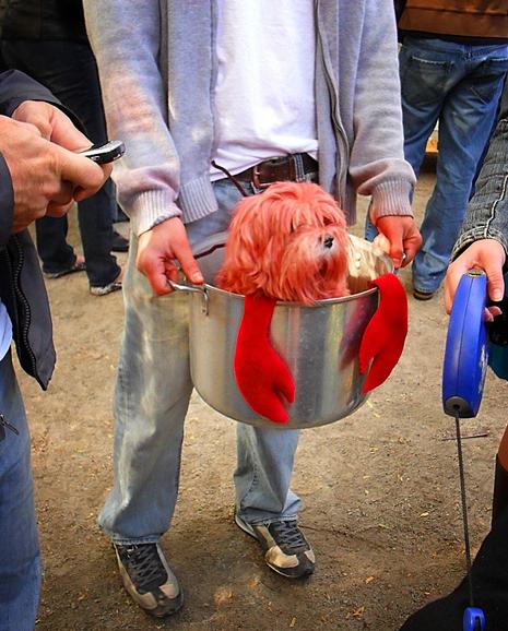 Lobster Dog Halloween