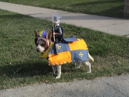 Medieval dog Halloween