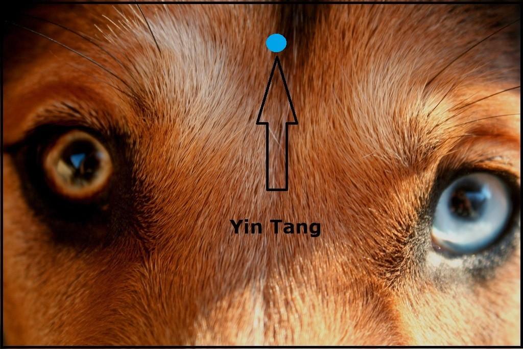 Yin Tang Acupressure