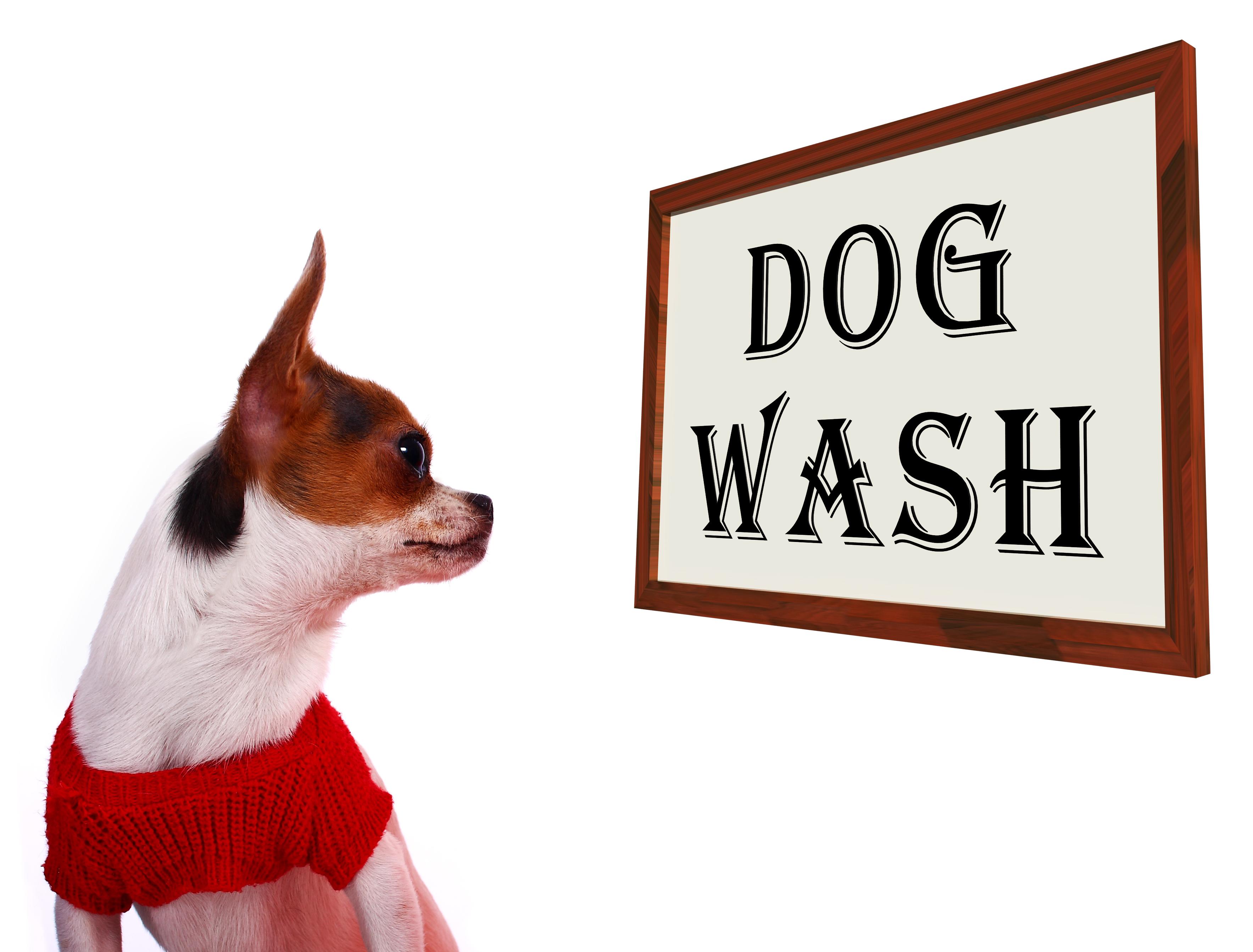 Can I Wash My Dog With Human Shampoo